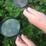 NATURE DETECTIVES Bugs, critters, lizards, beetles! We will investigate any little critter that gets students excited about caring for the environment! This incursion allows your students to get up close and personal with all sorts of garden creatures and fallen litter using a magnifying glass. A bug hotel will be installed in the garden. This will lead to rich discussions about bugs and beetles. There is a whole world beneath their feet. Each student will make his or her own mini bug hotel to take home. Duration: 1-2 hours