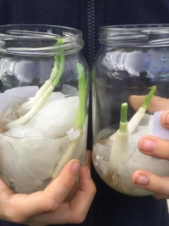 re-growing food