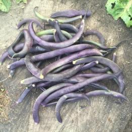 purple beans