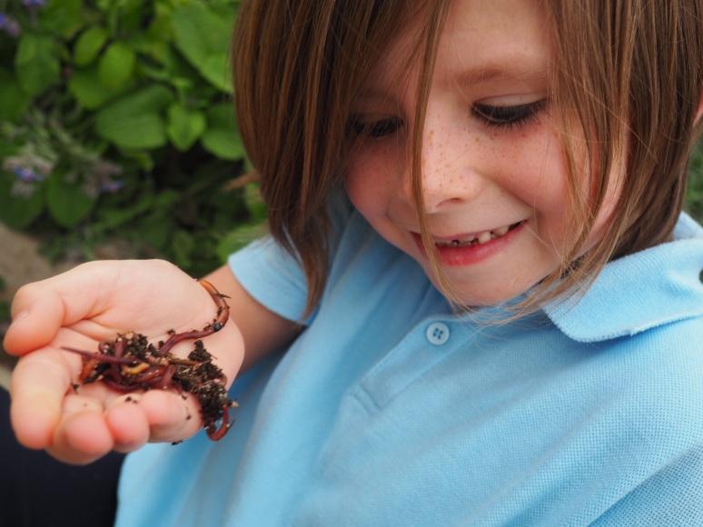 Worm Farming in schools