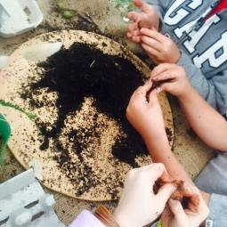 Stkilda holiday program - seed bomb making
