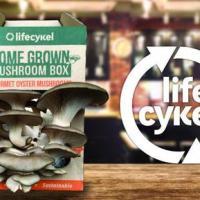 Mushroom Growing Challenge