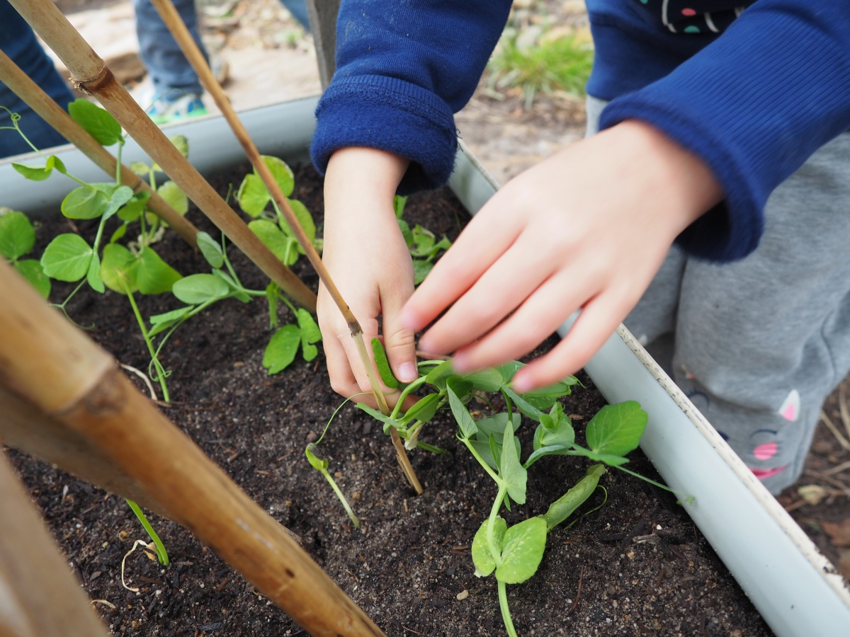 Growing food in kindergartens