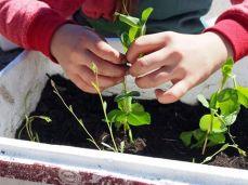 www.growingreenthumbs.com.au