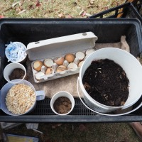 Composting & Worm Farming for kids