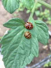 Growing Green Thumbs - bug hotels & nature detective