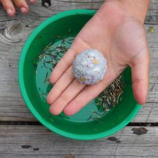 recycled paper seed bombs - Bonbeach PS curriculum program
