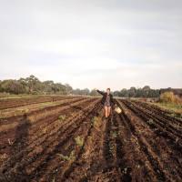 SUSTAINABLY LOCAL: Torello Farm